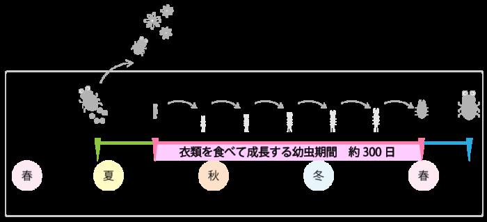 カツオブシムシの一生の図